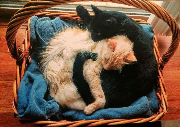 Yin Yang Cats!
