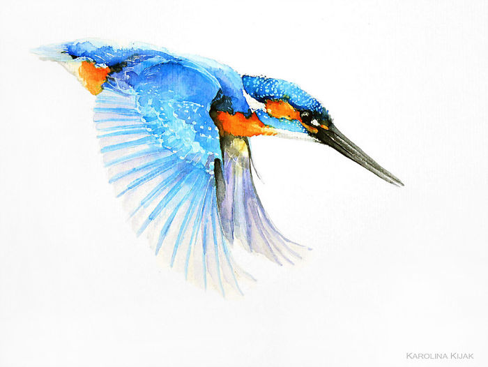 Kingfisher In Fly