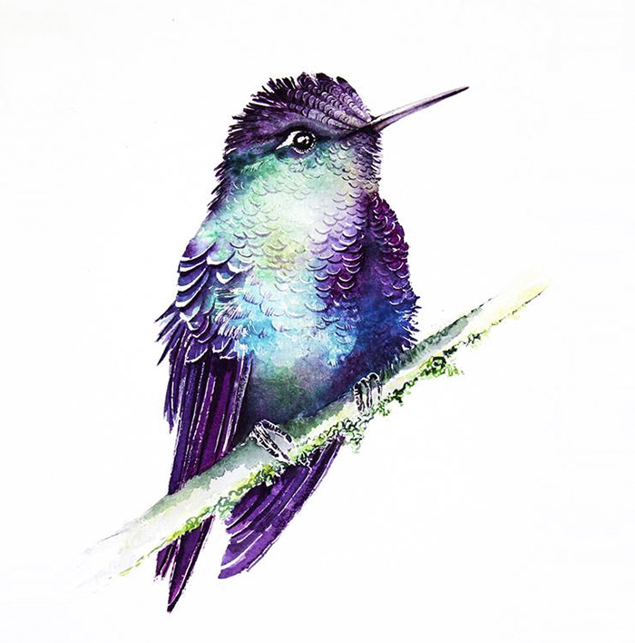 Hummngbird