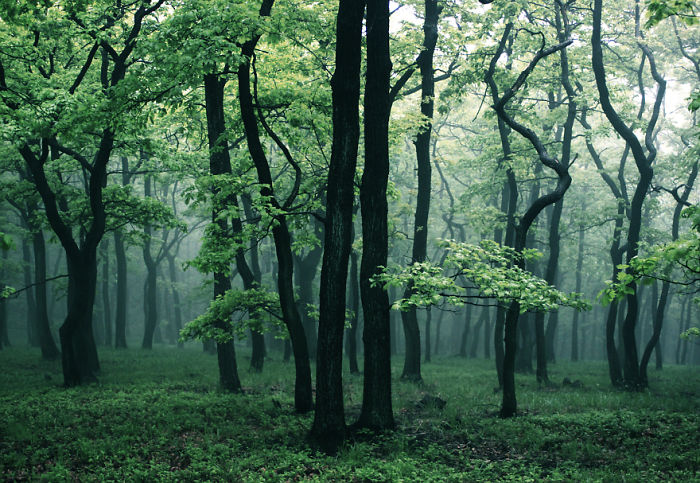 I've Spent 3 Years Photographing The Beauty Of The Forest That I Remember From My Childhood