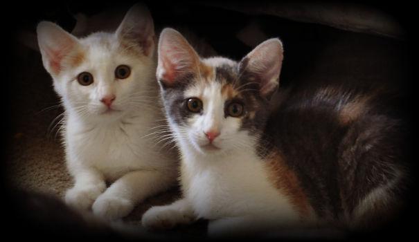 Kittens-010-583e08a6628a1.jpg