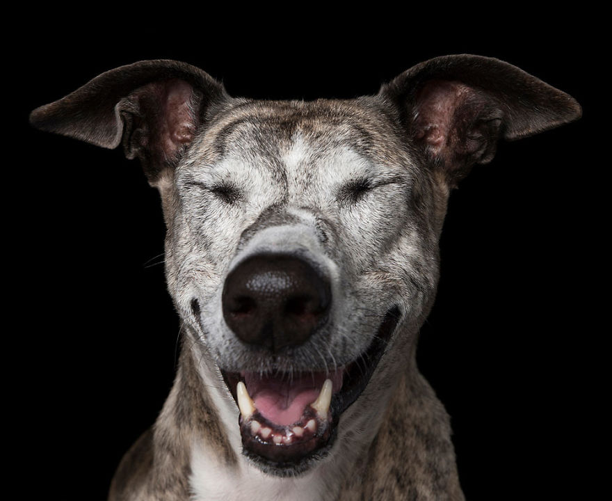 Ohm! These Chilled Canines Have Reached A State Of Zen - New Book By Alex Cearns