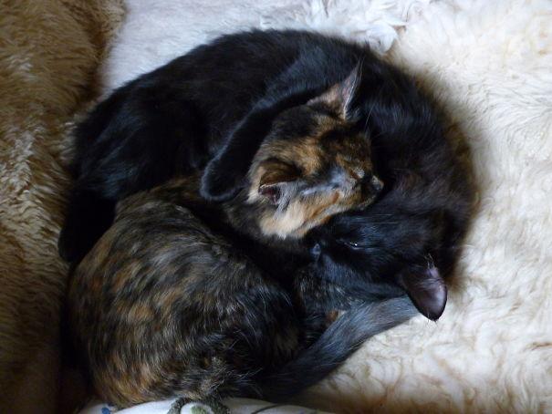 Kitty Yin Yang Swirl!