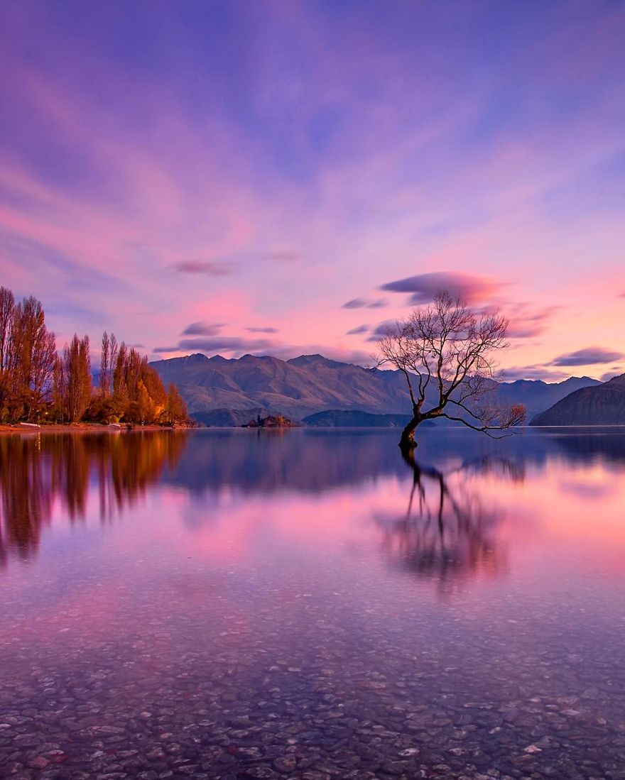 That One Time At The Wanaka Tree
