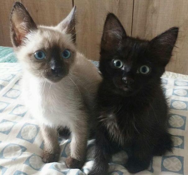 Nino And Amélie - Yin Yang Cats