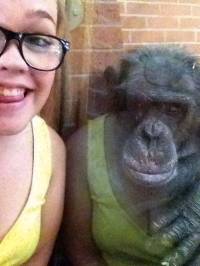 The Reflection Makes This Chimpanzee Look Like He Is Wearing Her Dress