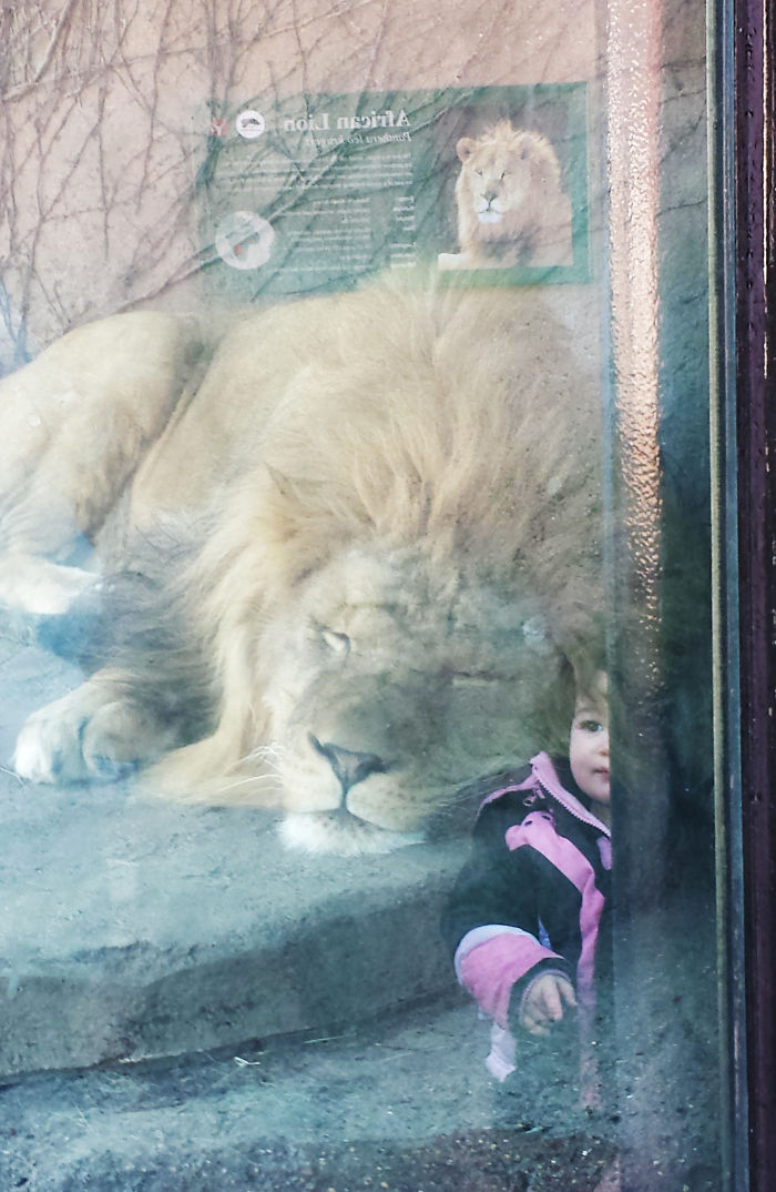 The Reflection Looks Like Someone Put A Kid With The Lion