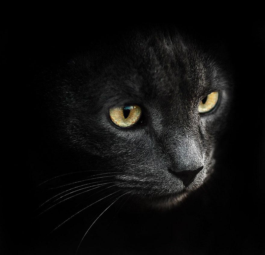 Animal Photographer by Sergey Polyushko #artpeople