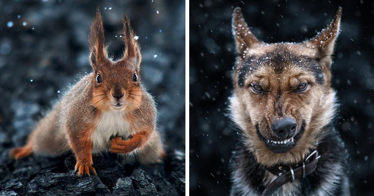 Beeindruckende Tierbilder des Fotografen Sergey Polyushko