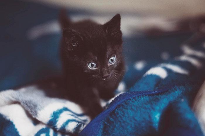 animal-shelter-free-adoption-cats-black-friday-1