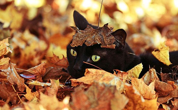 animal-shelter-free-adoption-cats-black-friday-12