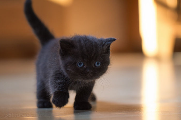 animal-shelter-free-adoption-cats-black-friday-17