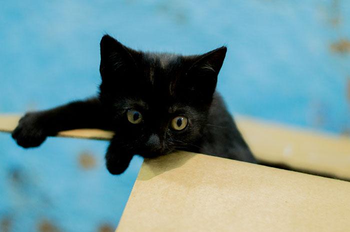 animal-shelter-free-adoption-cats-black-friday-4