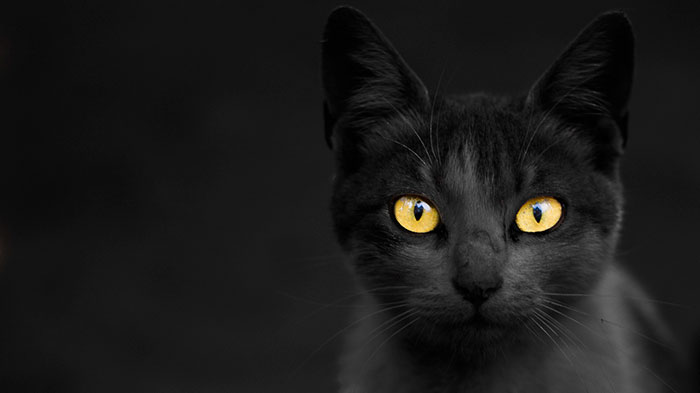 animal-shelter-free-adoption-cats-black-friday-7