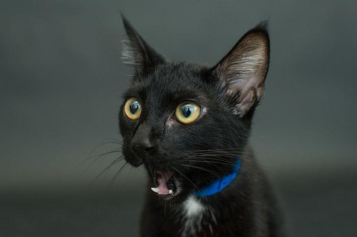 animal-shelter-free-adoption-cats-black-friday-8