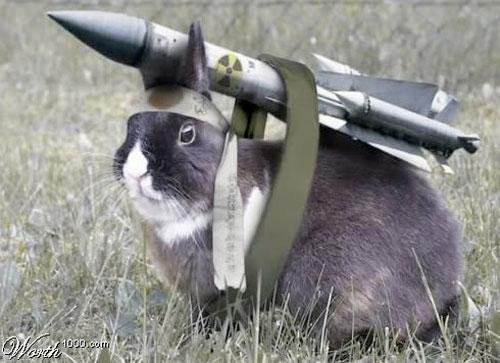 animals-carrying-rocket-582e05a133625.jpg