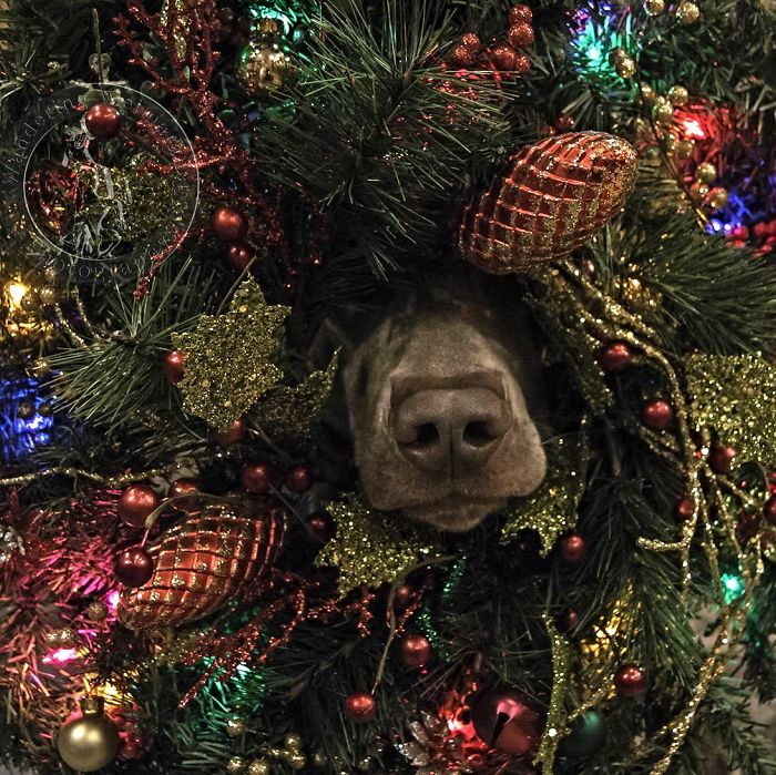 "On The First Day Of Christmas My True Love Said To Me ""The Dog Is Inside Our Tree"""