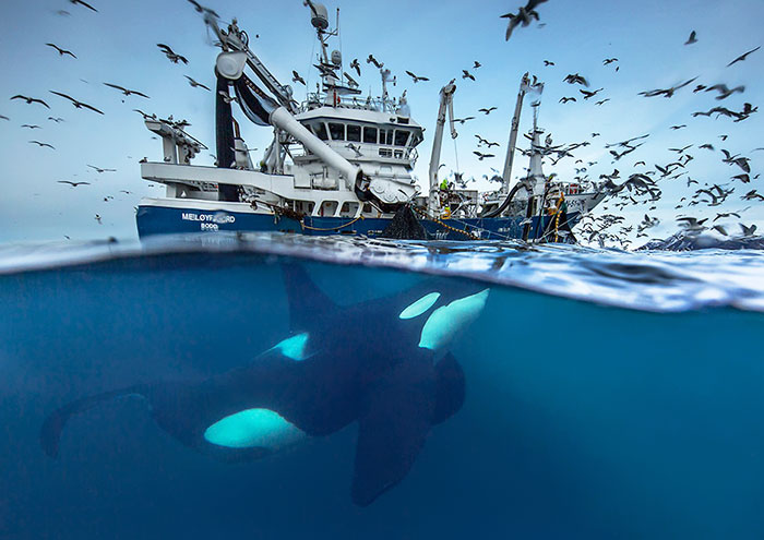 Biology Professor Photographs Arctic Whales And His Photos Will Take Your Breath Away (28 Pics)