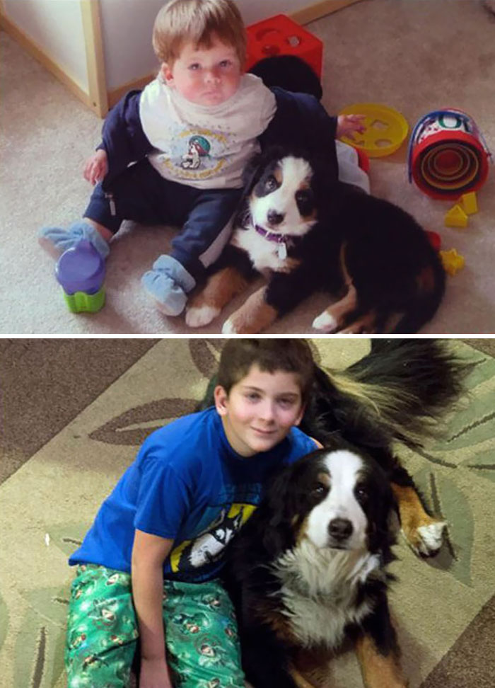 Dylan fue de alrededor de 14 meses de edad y Kobe fue de alrededor de 9 semanas en la primera imagen.  Ahora tiene 12 años y Dylan Kobe es 11