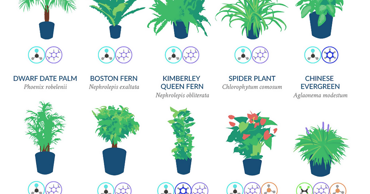 Nasa Reveals A List Of The Best Air Cleaning Plants For Your Home Bored Panda