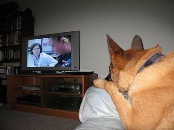 big-dog-watching-TV-582b21563bf16.jpg