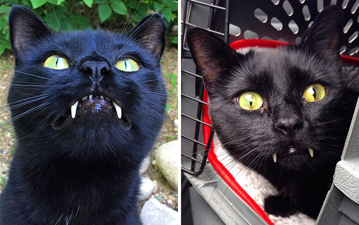 """Woman Gets Surprised When Her Rescue Cat Turned Out to Be A """"Vampire"""""""