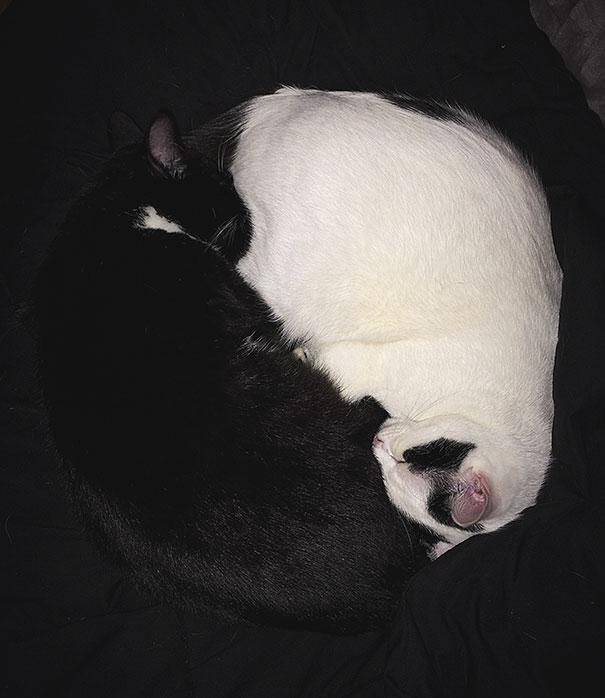 My Sweet Yin Yang Kitties
