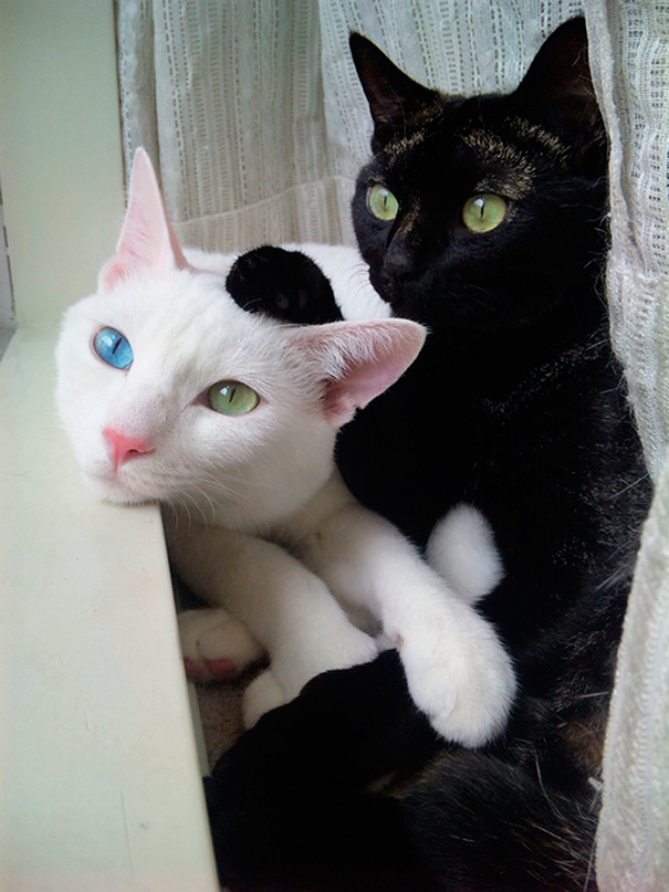 These Beautiful Cats