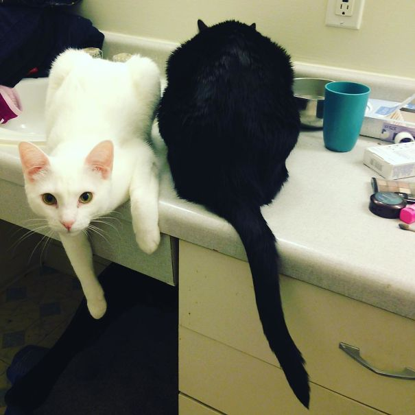 White Paws And Black Tail