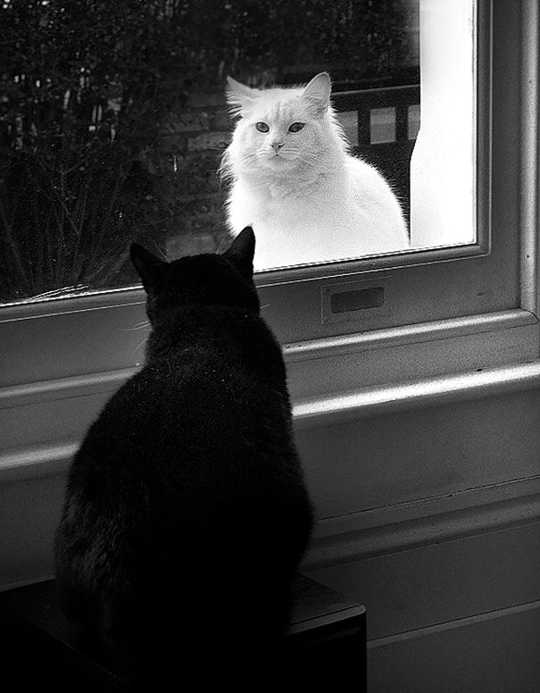 Paradoxical Mirror