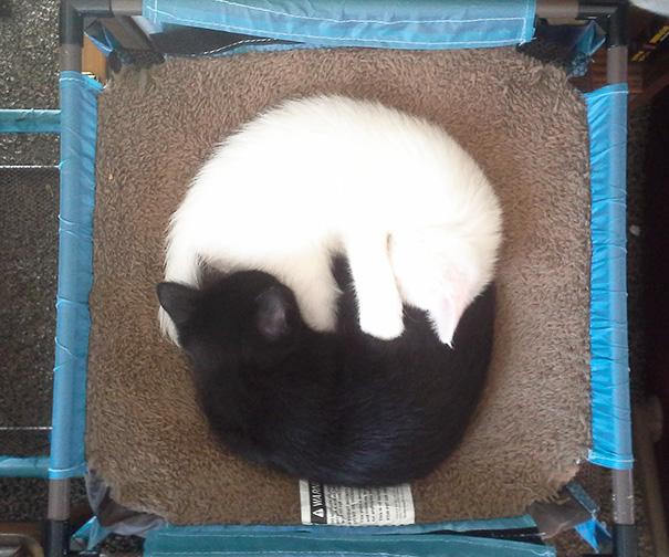 Yin-Yang Kitties