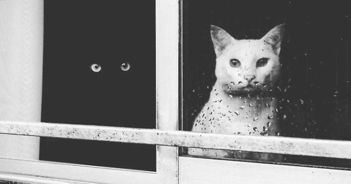 видео черно белый кот