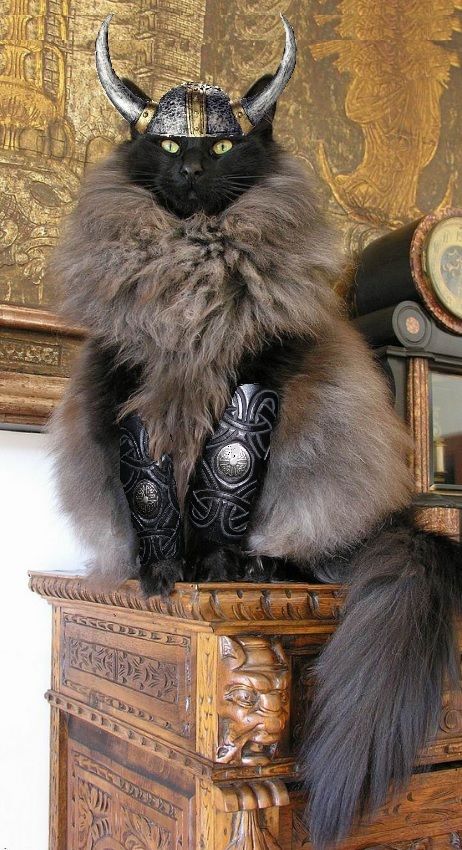 cat-viking-wear-fur-skin-of-others-581afbcd14164.jpg