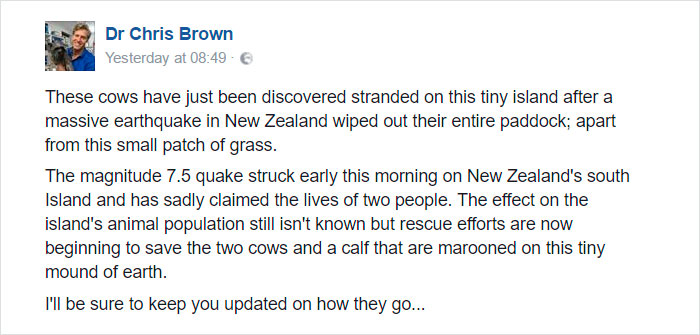 cows-trapped-earthquake-new-zealand-1
