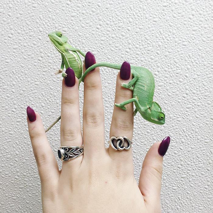 Baby Chameleons On My Fingers