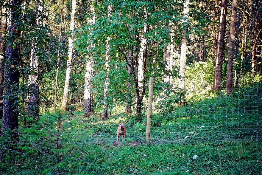 perro-cabañas-oregon-refugio-4
