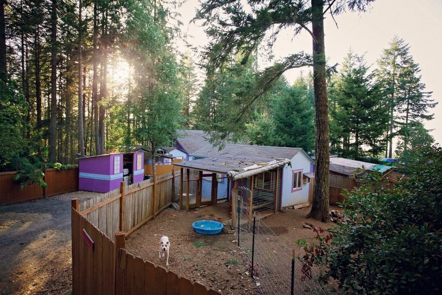 dog-cottages-oregon-shelter-8
