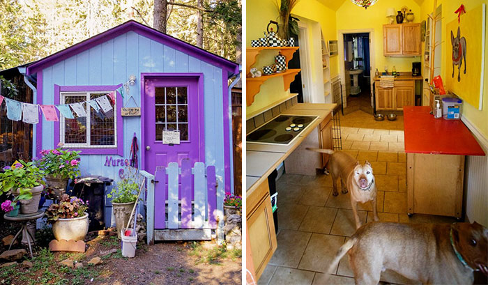 Shelter Builds Private Cottages For Dogs, Because Animals Shouldn't Live In Cages