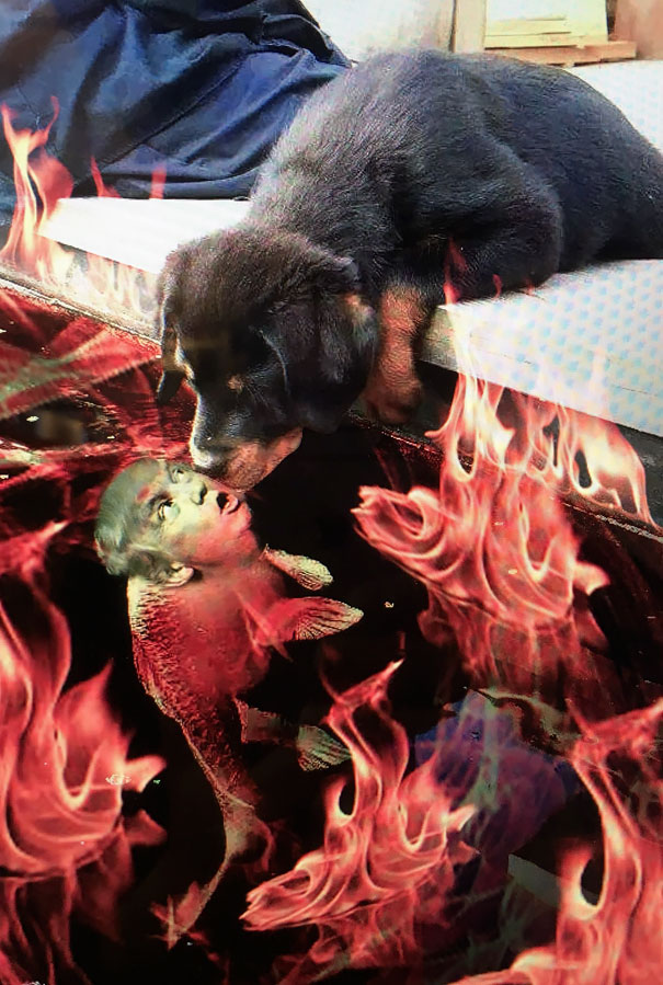 Puppy kissing a fish inspires a hilarious photoshop battle for Battle fish 2