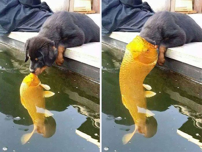 Puppy Kissing A Fish Inspires A Hilarious Photoshop Battle (30 Pics)