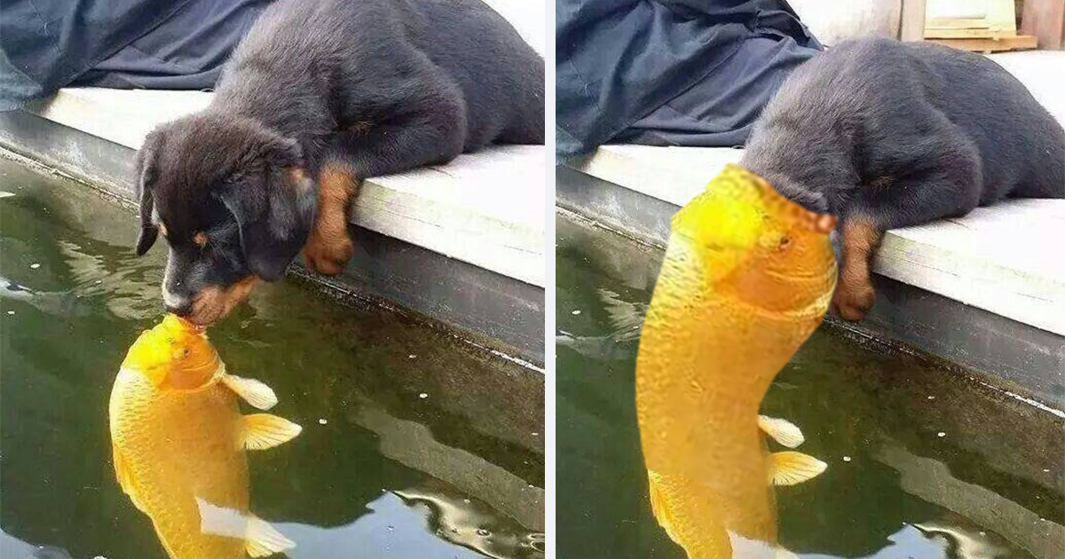 Puppy Kissing A Fish Inspires A Hilarious Photoshop Battle 10 Pics