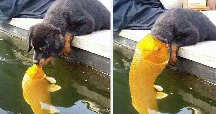 puppy kissing a fish inspires a hilarious photoshop battle 10 pics - Picture Of Fish