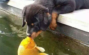 Puppy Kissing A Fish Inspires A Hilarious Photoshop Battle (10+ Pics)