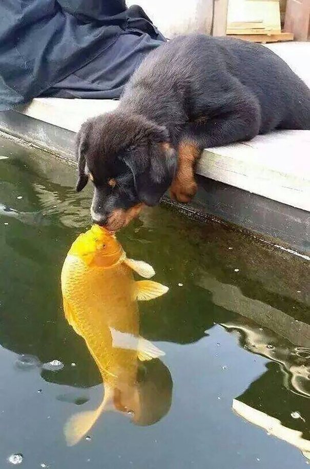 Puppy kissing a fish inspires a hilarious photoshop battle for Is fish good for dogs
