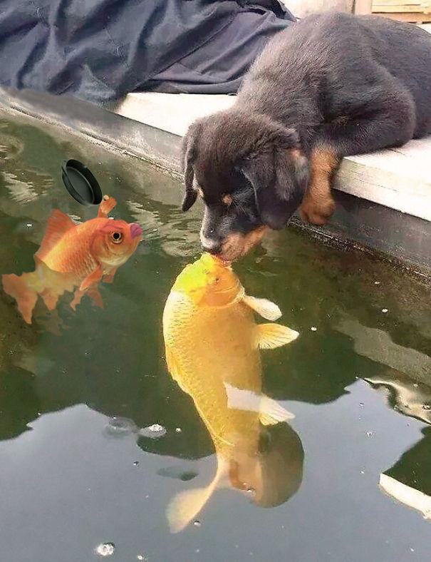 Jealous Fish Wife