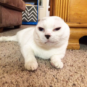 Woman Adopts Earless And Deaf Senior Cat Everybody Ignored, And Later He Saves Her
