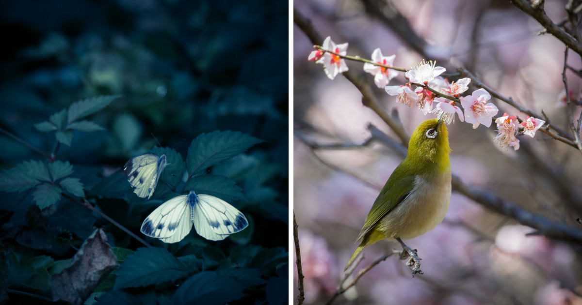 I Capture Nature In Japan In The Visual Haiku Style