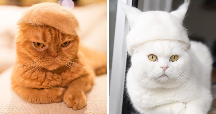 Cats Wearing Hats Made From Thwir Fur