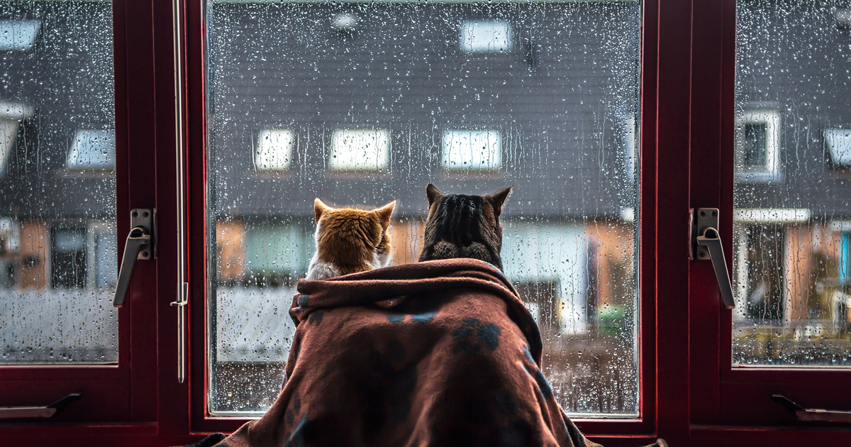 I Photograph My Cats In Front Of The Window Whenever It's Raining