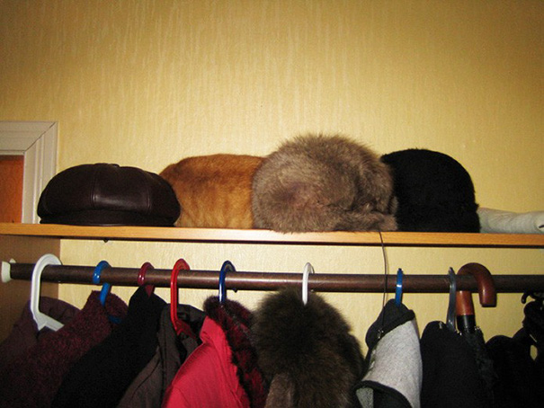Hat Cat